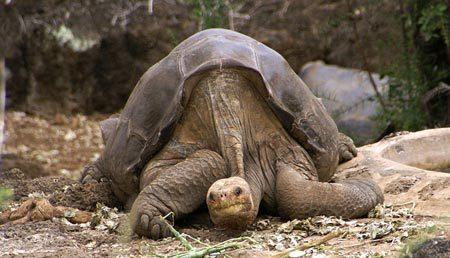 động vật, sống thọ, nhất trái đất