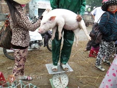 lợn, bột tẩy bồn cầu, lẩu, axit, khăn giấy ướt, hàn the
