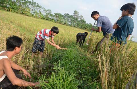 Tiểu đội săn bắt chuột làm thịt ở Hà Nội