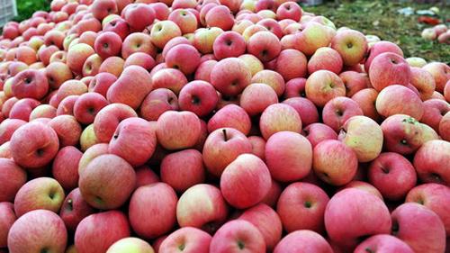 Hồng, táo, thủy sản, nhiễm độc, mẫu