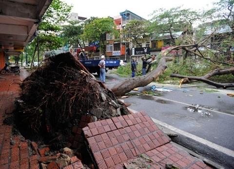 Quảng Ninh thiệt hại 200 tỷ đồng do bão Haiyan