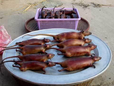 Thịt chuột, đặc sản, chuột, món ngon, thực đơn, cỗ cưới, sức khỏe, người tiêu dùng