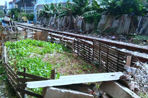 Biến hành lang đường sắt thành nơi trồng rau sạch