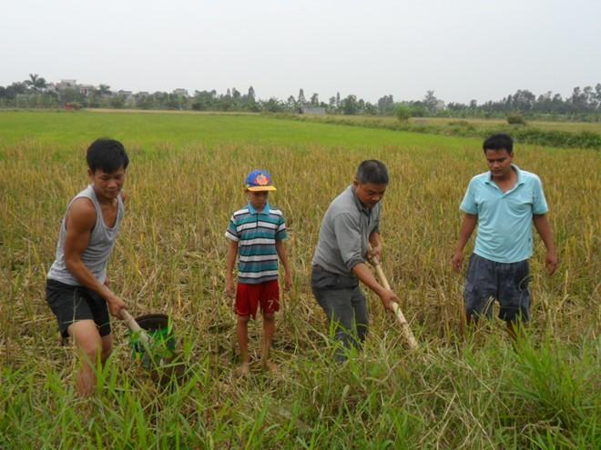 Thái Bình: Mỗi nhà kiếm vài chục triệu/tháng nhờ săn chuột