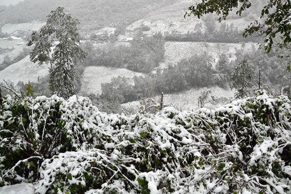 Hình ảnh Sa Pa phủ trắng tuyết tuyệt đẹp