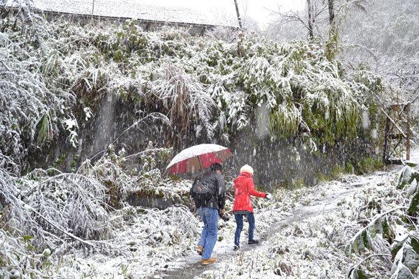 Hình ảnh, Sa Pa, phủ trắng tuyết