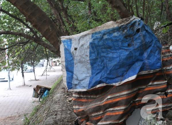 nhà trên cây, lao động nhập cư
