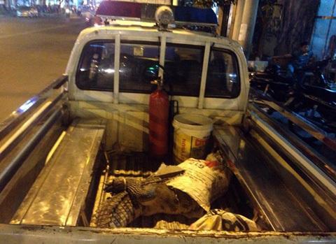 Hoảng hồn vì cá sấu 50 kg... nhảy ra giữa đường