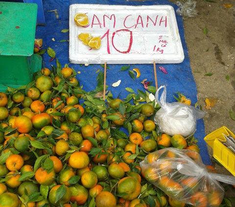 Cam Trung Quốc đội lốt cam Vinh, cam Canh