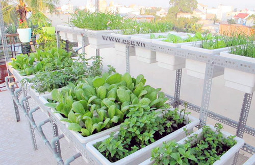 Vườn-rau, trồng-rau, tại-nhà, Hà-Nội, chăm-sóc, thuê, dịch-vụ, rau-sạch, chất-lượng