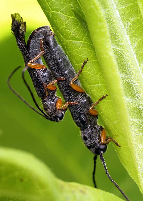 sex, tự nhiên, ong bắp cày, hút mật, kiến