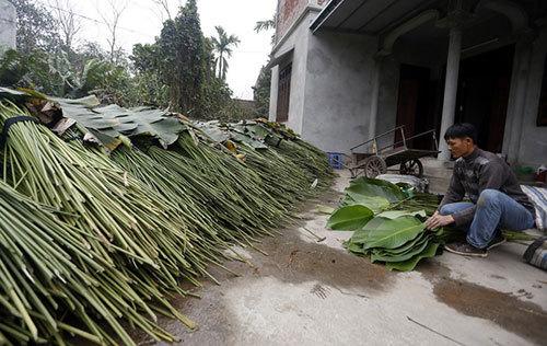 Tràng Cát - thôn lá dong lớn nhất Hà Nội