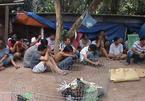 Cảnh sát tập kích trường gà vùng ven, tạm giữ 30 người