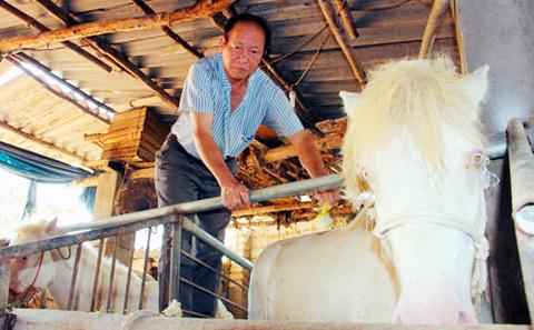 Chuyện làng Phẩm: Làm giàu từ ngựa bạch