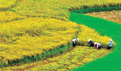 công-nhân, nông-dân, lao-động, kiếm-tiền, thu-nhập, lương, thưởng, no-ấm, giàu có