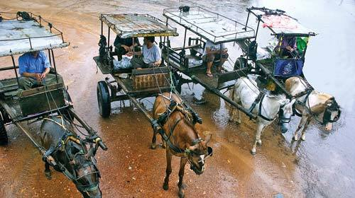 Giáp Ngọ, 2014, xe ngựa