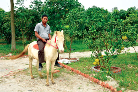 Người đầu tiên lai ngựa Việt với ngựa Bạch Tây Tạng