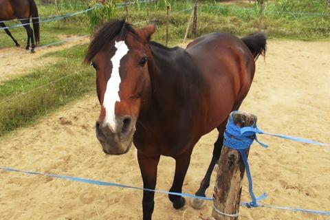 Giữ lửa nghề nuôi ngựa đua ở Sài Gòn