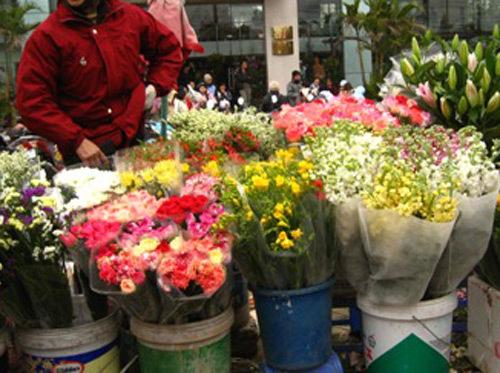 Thương lái Trung Quốc 'săn' hoa hồng Đà Lạt