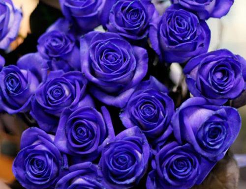 Hơn 5 triệu đồng một bó hồng xanh Valentine