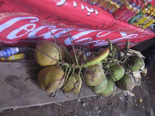 Cận cảnh những quả dừa giá 175.000 đồng