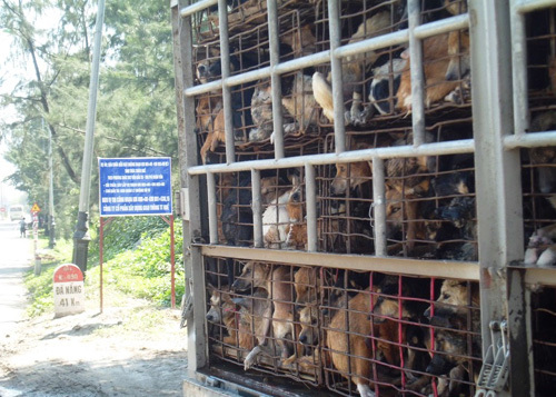 Giết 5 triệu con chó/năm: Thế giới khiếp Việt Nam