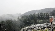 Xuất hiện mưa tuyết ở Sa Pa