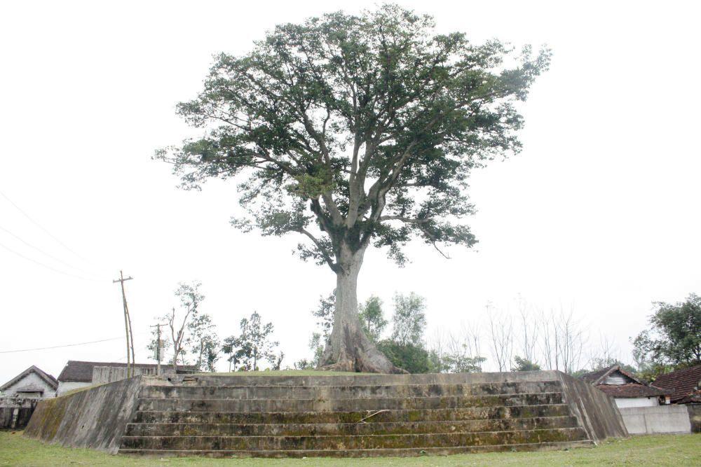 cây sui, xứ Nghệ, Nghệ An, trăm tuổi, Diên Tràng