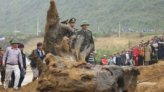Trùm Hùng 'mía' trong vụ gốc sưa tiền tỷ ở Quảng Bình
