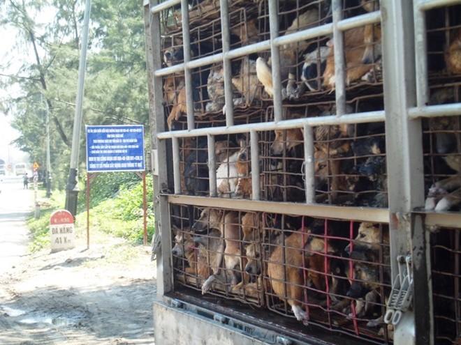 Sợ đại dịch, ngăn chặn chó nhập khẩu