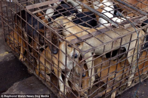 Chợ thịt chó kinh hãi nhất hành tinh