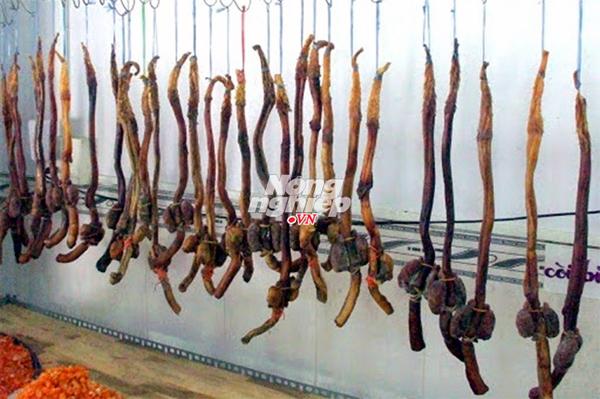 Pín hải cẩu tăng sinh lực bán la liệt như rau