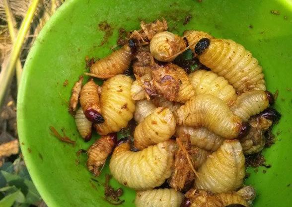 đuông-dừa, món-ăn, kinh-dị, đặc-sản, Bình-Định, dân-nhaauj, khiếp-vía, thịt-chó