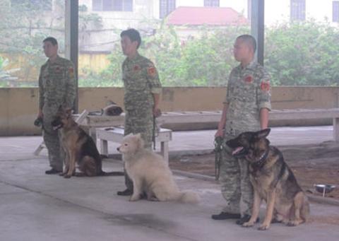 Đại gia sắm chó nghiệp vụ bảo vệ mình