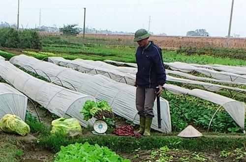 Phun thuốc cực độc sản xuất… rau an toàn bán cho Hà Nội