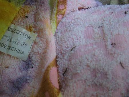 Hoảng loạn tin đồn thực phẩm có đỉa, quần áo chứa ấu trùng