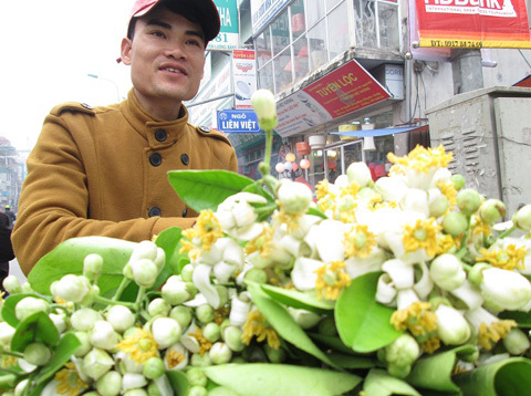 Lạ lùng người Hà Nội chơi hoa bưởi cả cân