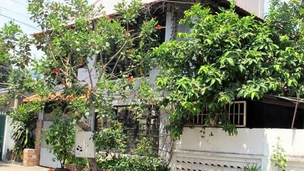 Thời sự trong ngày: Vườn cần sa 'khủng' giữa thành phố