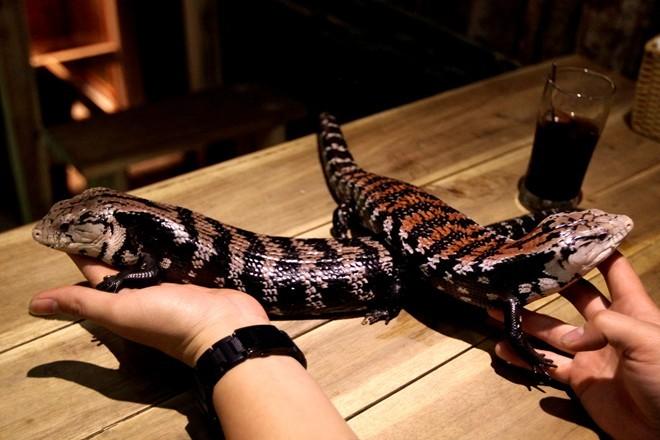 cafe, rắn, kỳ-đà, rùng-mình