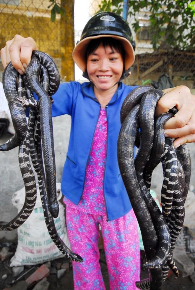 Chợ côn trùng độc nhất Việt Nam