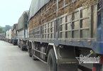 Tắc gần 100km, xe dưa hấu vẫn đổ về Tân Thanh