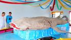 Lễ nghinh cá voi lớn nhất Việt Nam ra biển