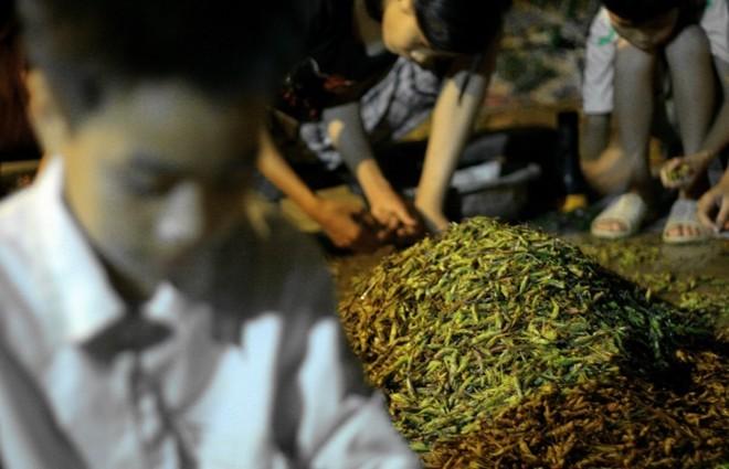Các nghề 'độc' kiếm tiền triệu hàng ngày chỉ có ở Việt Nam
