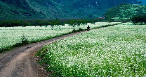 cánh đồng, đồi chè, tam giác mạch, thung lũng