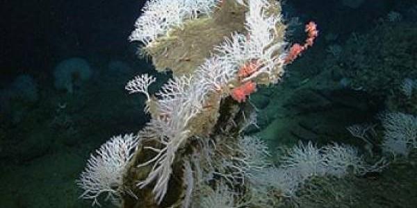 Phát hiện bốn loài bọt biển ăn thịt mới