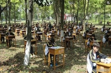 thi, rừng, quay cóp, Trung Quốc