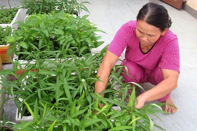 Sợ đồ Trung Quốc, người Sài Gòn dọn chỗ ở trồng rau