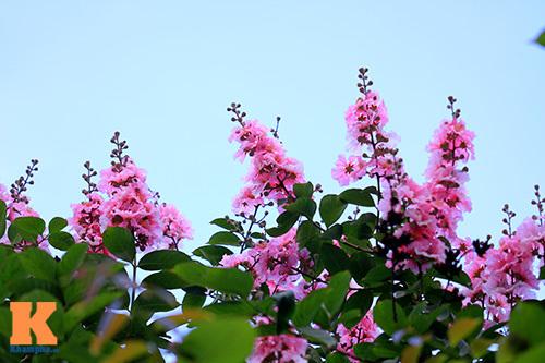 Hà Nội, tháng năm, bằng lăng, mùa hè
