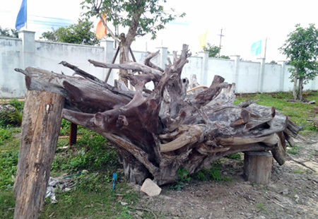 gốc-cây, tiền-tỷ, gốc-sưa, siêu-phẩm, đồ-gỗ, gỗ-trắc, gỗ-lũa, cây-bàng, gốc-trâm, cây-đa, hóa-thạch, ngàn-năm