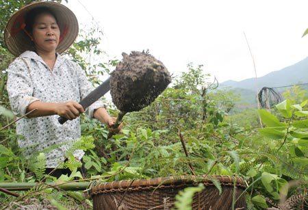 Mùa trứng kiến: Săn lộc rừng đãi nhà giàu